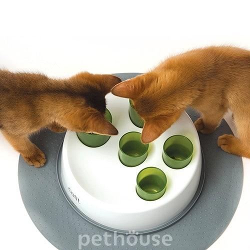 spayed female cat spraying behavior