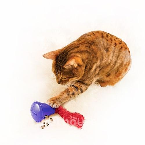 when do bengal cats start spraying